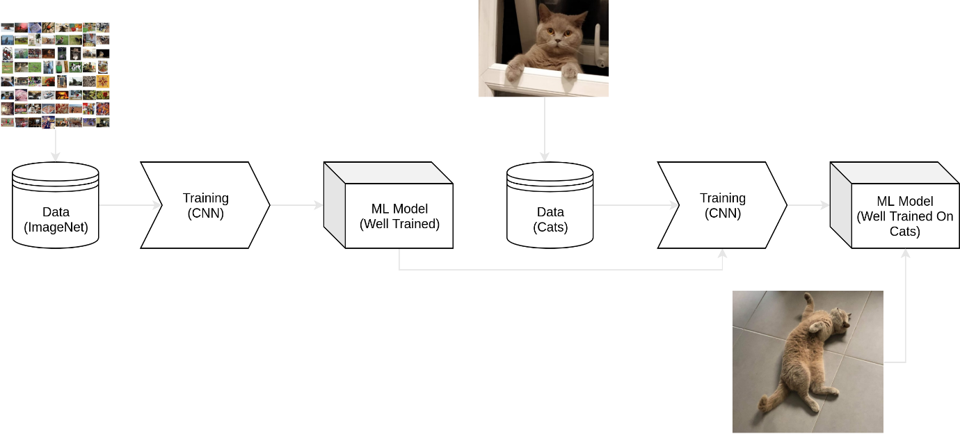 Transfer Learning Cats | Analytics Engines